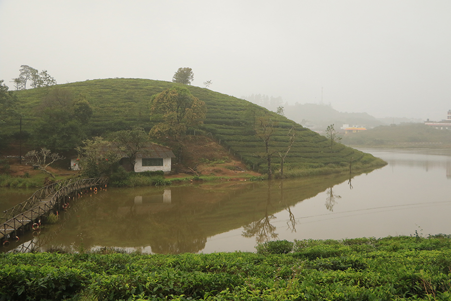 lake-tea-plantations-vagamon